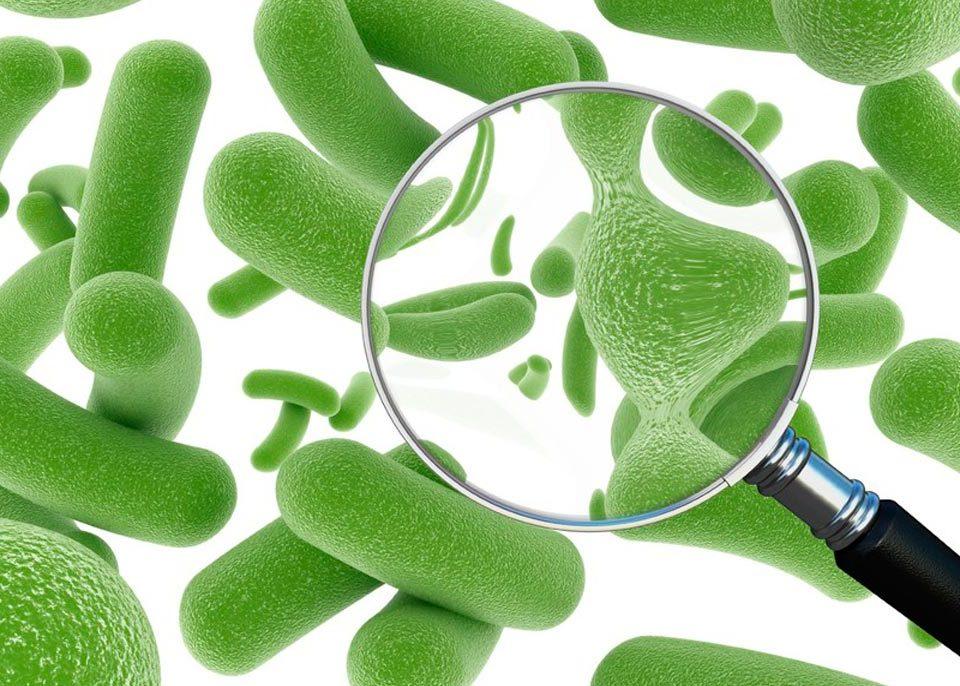 натуральный пробиотик